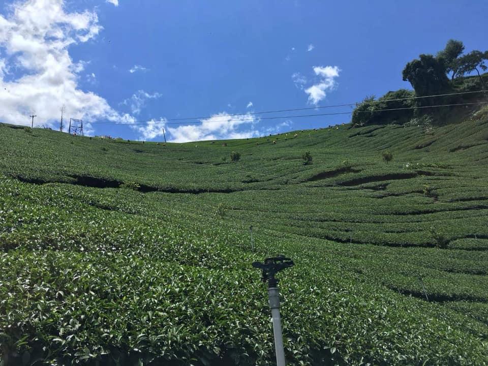 <第6回>台湾茶を楽しむ会